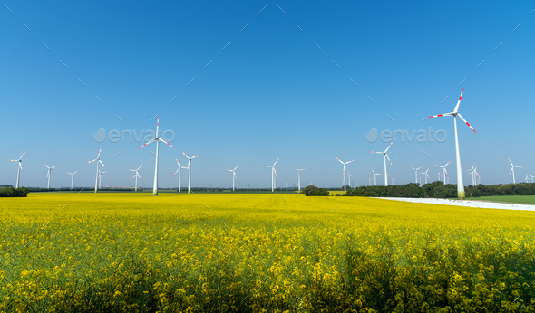Yellow blooming oilseed rape with wind energy plants  - Stock Photo - Images