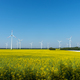 Yellow blooming oilseed rape with wind energy plants  - PhotoDune Item for Sale