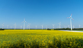 Yellow blooming oilseed rape with wind energy plants  - PhotoDune Item for Sale