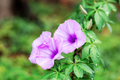 Purple flower in forest - PhotoDune Item for Sale