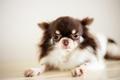 Dog on floor - PhotoDune Item for Sale