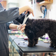 Woman cutting hair a dog in pet shop - PhotoDune Item for Sale