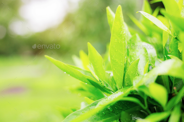 Leaves with sunrise - Stock Photo - Images