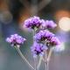 Purple flower with sunset - PhotoDune Item for Sale