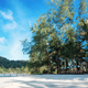 Tree on beach with blue sky - PhotoDune Item for Sale