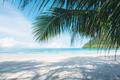 Coconut leaves on beach - PhotoDune Item for Sale