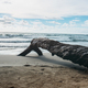 Wooden on sand beach - PhotoDune Item for Sale