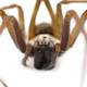 predatory spider - PhotoDune Item for Sale