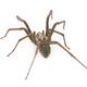 predatory spider - PhotoDune Item for Sale