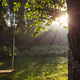 morning dawn - PhotoDune Item for Sale