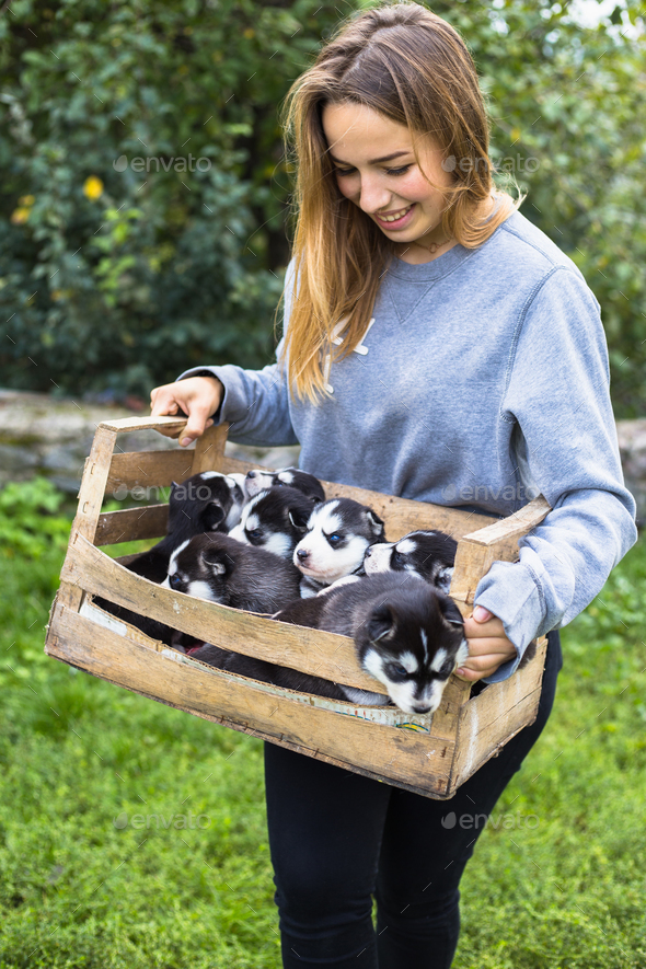 Close up of cute siberian puppy sitting in wooden box. - Stock Photo - Images