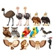 Set of Bird on White Background - GraphicRiver Item for Sale