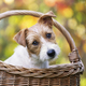 Puppy in a basket - PhotoDune Item for Sale