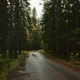 Asphalt road going through dark conifer forest - PhotoDune Item for Sale
