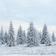 Fairy winter landscape with snow covered Christmas trees - PhotoDune Item for Sale