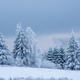 Fir trees covered with snow and hoarfrost in the mountains - PhotoDune Item for Sale
