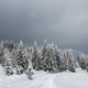 Winter trees in mountains covered with fresh snow - PhotoDune Item for Sale