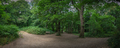 Panoramic view of the path through Banstead woods - PhotoDune Item for Sale
