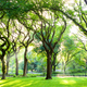 American Elms in Central Park - PhotoDune Item for Sale