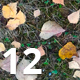 Pack of 12 Autumn Ground Textures