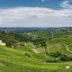 Vineyards near Barbaresco, Cuneo, in Langhe - PhotoDune Item for Sale