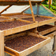 Side View of Organic Coffee Beans Drying In Crates Outdoor - PhotoDune Item for Sale