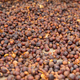 Close-up of Raw Coffee Beans Drying In Crate - PhotoDune Item for Sale