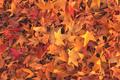 Yellow autumn leaves on asphalt road - PhotoDune Item for Sale