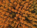 Aerial view of beautiful forest in autumn - PhotoDune Item for Sale