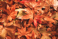 Dry autumn leaves on the ground - PhotoDune Item for Sale