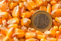 One Euro coin in harvested corn kernels heap - PhotoDune Item for Sale