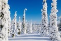 Beautiful winter landscape with snowy trees in Lapland, Finland. Frozen forest in winter. - PhotoDune Item for Sale