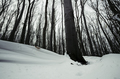 Heavy snow in the woods - PhotoDune Item for Sale