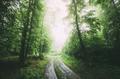 Road through green woods - PhotoDune Item for Sale
