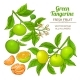 Green Tangerine Vector - GraphicRiver Item for Sale