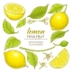 Lemon Elements Set - GraphicRiver Item for Sale