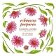 Echinace Purpurea Vector - GraphicRiver Item for Sale