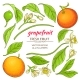 Grapefruit Elements Set - GraphicRiver Item for Sale