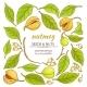 Nutmeg Elements Set - GraphicRiver Item for Sale