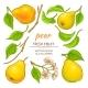 Pear Elements Set - GraphicRiver Item for Sale
