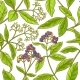 Free Download Allspice  Branch Vector Pattern Nulled