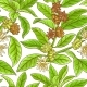 Free Download Anise Branches Pattern Nulled
