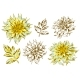 Set of Fluffy Yellow Dahlias and Leaves - GraphicRiver Item for Sale