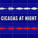 Cicadas at Night