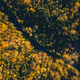 Road in the autumn forest aerial view from drone - PhotoDune Item for Sale