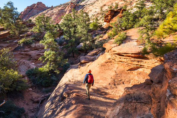 Hike in Zion - Stock Photo - Images