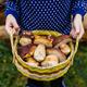 Fresh mushrooms - PhotoDune Item for Sale
