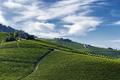 Vineyards near Barolo, Cuneo, in Langhe - PhotoDune Item for Sale