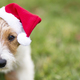 Santa dog banner - PhotoDune Item for Sale