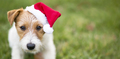 Santa dog banner - PhotoDune Item for Sale